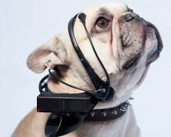 Un aparato traduce los pensamientos de los perros en palabras
