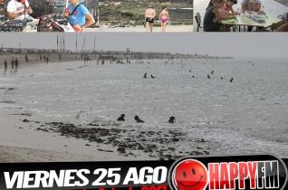 (fotos) Semana Cultural Playa de la Cebada 2017 – 25 Agosto